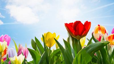 De lente is begonnen en dus hebben wij een mooie voorjaarsactie voor alle leuke feestje